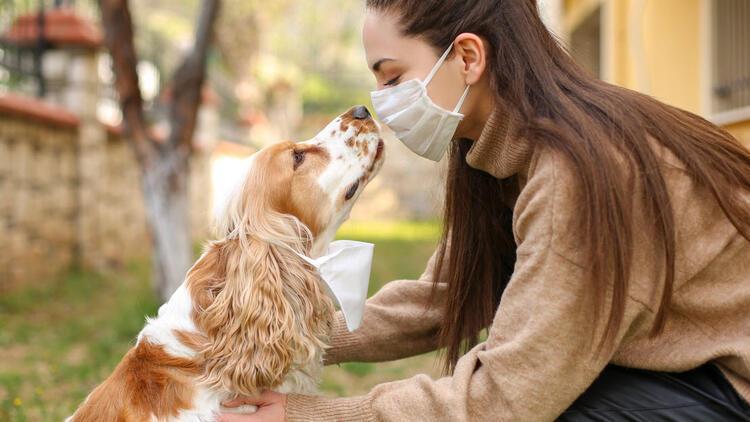 Köpekler virüsün kokusunu alabilir mi?