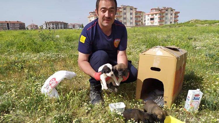 Toprak altında mahsur kalan yavru köpekler kurtarıldı