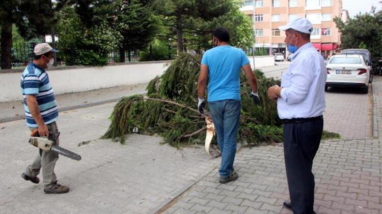 Bolu'da rüzgar ağacın dalını kırdı