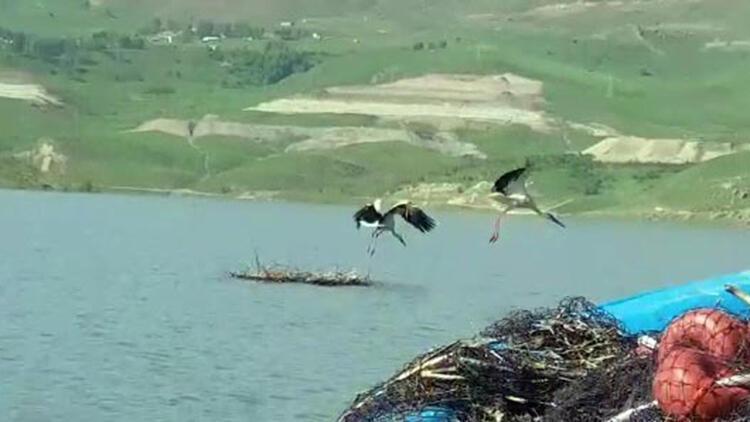 Baraj gölü sularına gömülen leylek yuvasındaki 4 yavru telef oldu