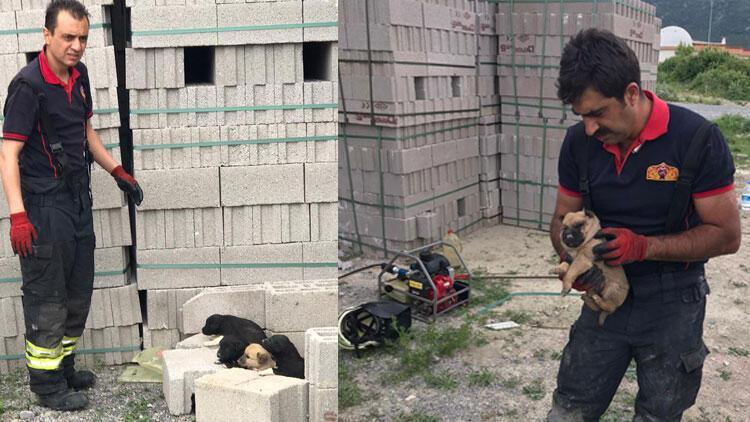 İtfaiye ekipleri yavru köpekleri ölümden kurtardı