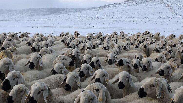 Sivas'ta kar yağışı