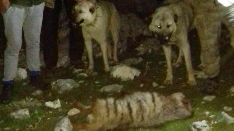 Vahşet! Köpeklere parçalatıp öldürdüler