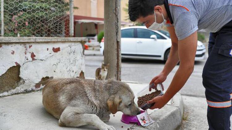 Denizli'de sokak hayvanları için mama ve su bırakıldı