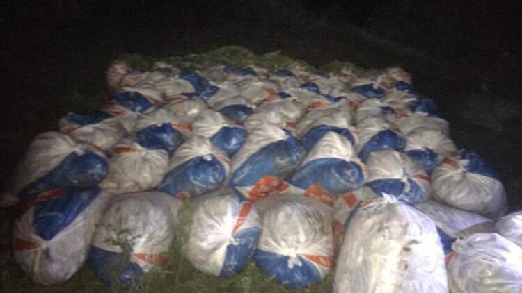 Van'da 15,5 ton kaçak avlanan inci kefali ele geçirildi