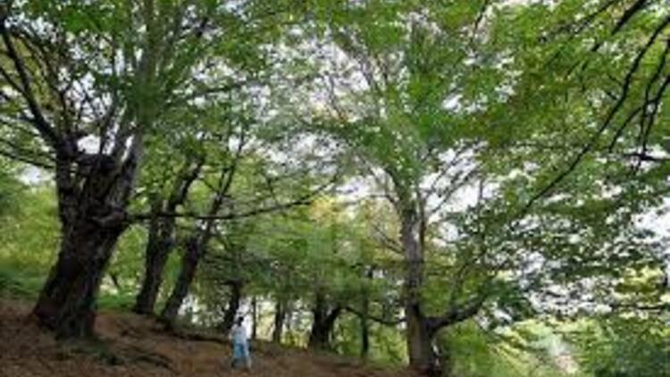 Ormanların sağlığına 902 noktadan yakın takip
