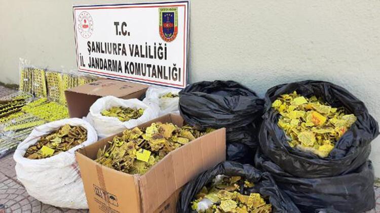 Siverek'te sahte hayvan küpesi operasyonu: 14'ü veteriner 17 gözaltı