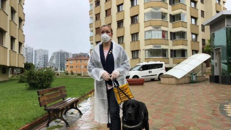 Görme engellilerin can yoldaşı: Rehber köpekler