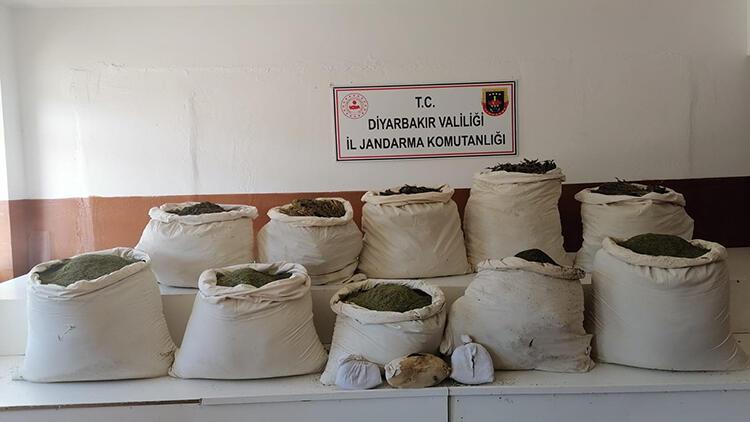 Diyarbakır'da 2 milyon 452 bin kök Hint keneviri ele geçirildi