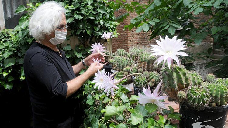 Yılda bir kez çiçek açan kaktüsler, ilgi görüyor