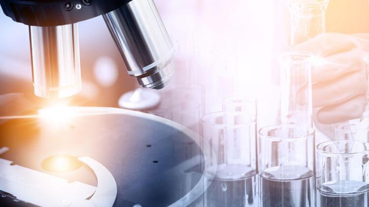 Laboratuvar yapımı testis