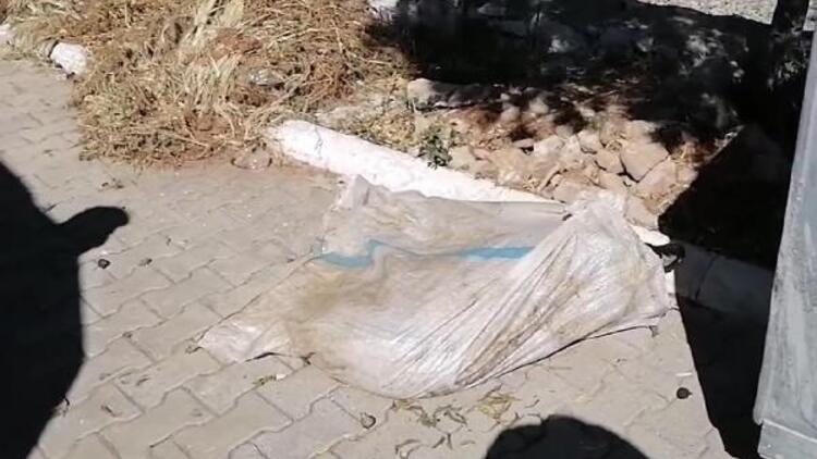 Vicdansızlık! Bacakları bağlanan koç, çöp konteynerinde ölüme terk edildi