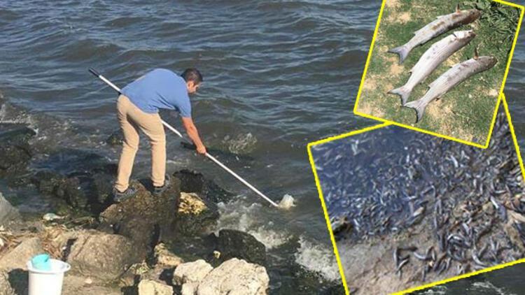 Το Υπουργείο Περιβάλλοντος και Αστικοποίησης έκανε μια δήλωση σχετικά με τους θανάτους ψαριών στη λίμνη Küçükçekmece