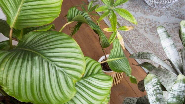 Evin Havasını Temizleyen 15 Bitki ve Çiçek