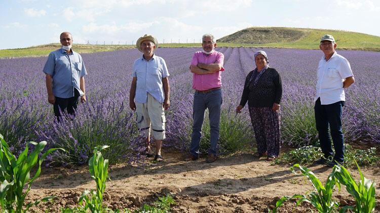 40 yıl sonra döndüğü köyüne lavanta bahçesi kurdu
