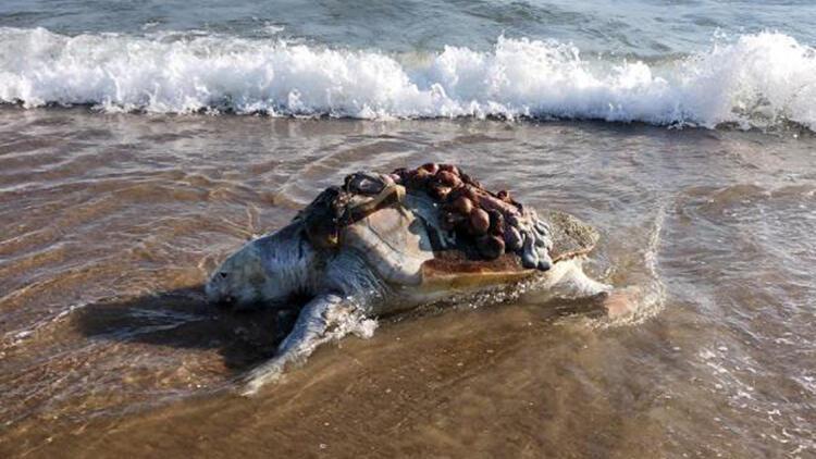 Ağzına ve yüzgecine poşet dolanan deniz kaplumbağasını vatandaşlar kurtardı