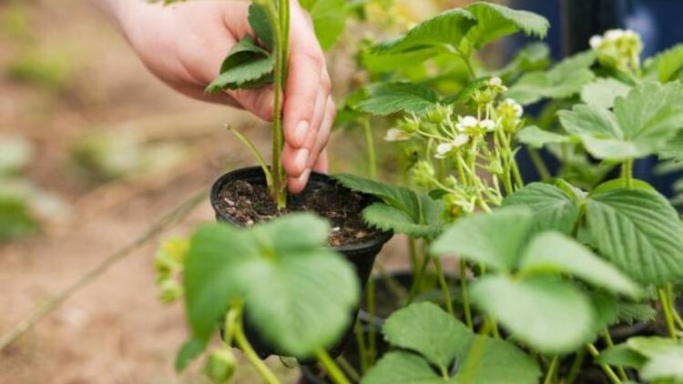 Balkonda bitki yetiştirenlerin dikkatine!