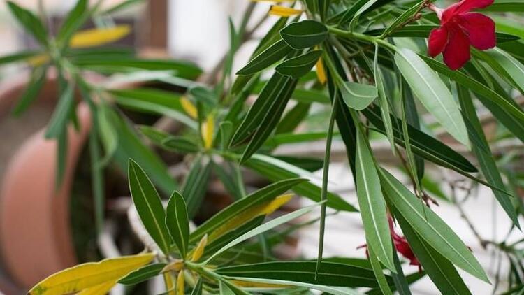 Çocukların odasına konulan bu bitkilere dikkat!