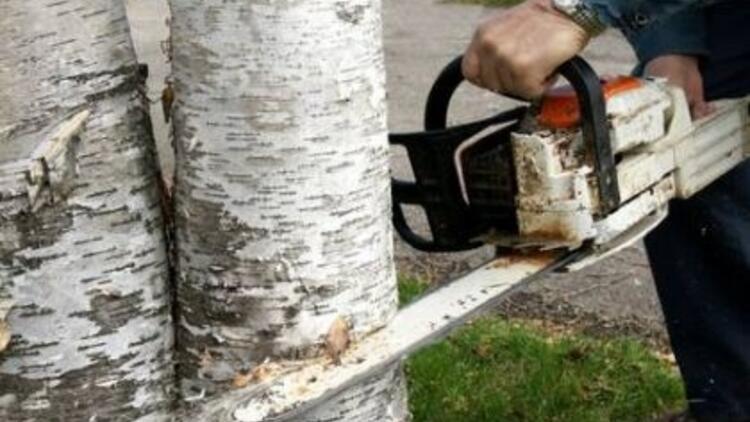 Sokak aralarındaki ağaçların kesim prosedürü