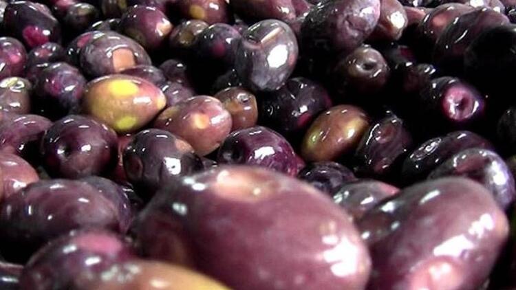 Eşek zeytini zayıflatıyor mu?