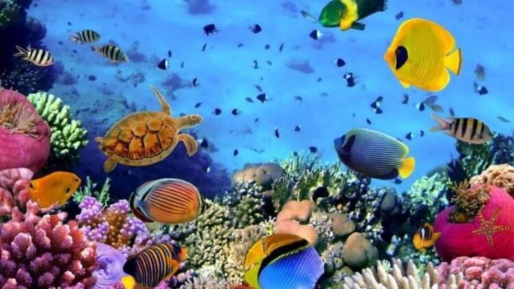 """""""Deniz Canlıları Sergisi"""" 14 Eylül'de başlıyor!"""