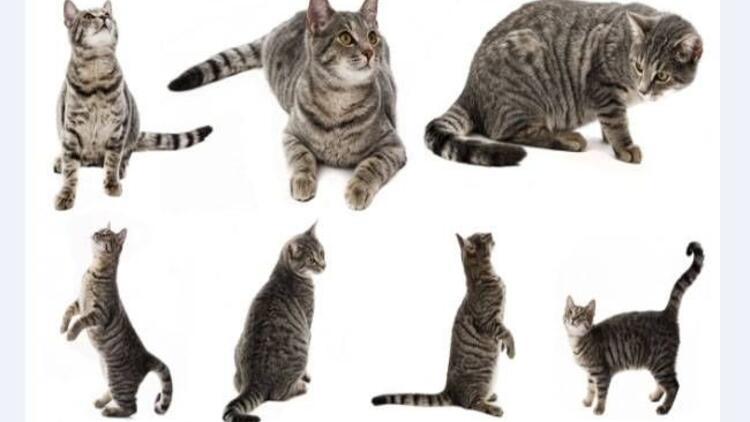 Kedilerin bu hallerine bayılacaksınız!