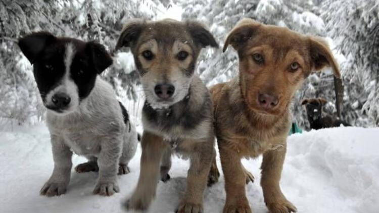 Hayvan Hakları Tasarısı'nda geri adım iddiası