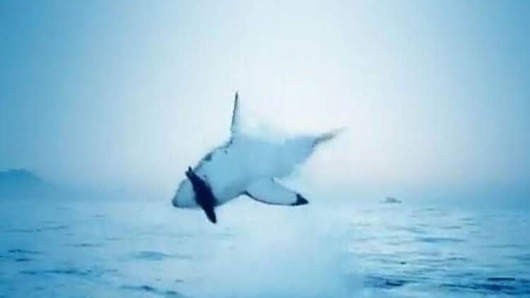 Bu köpek balığı uçuyor!
