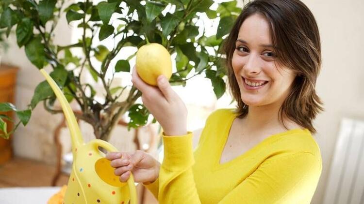 Evde sebze meyve nasıl yetiştirilir?