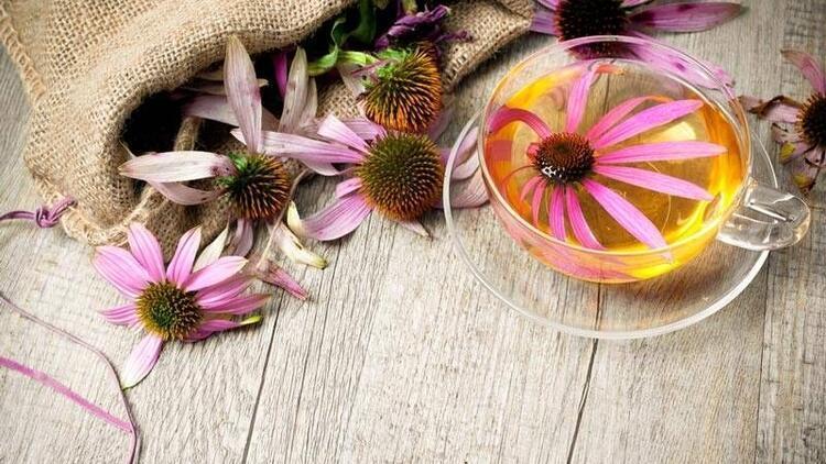 Ekinezya çayı ile bağışıklığınızı güçlendirin!