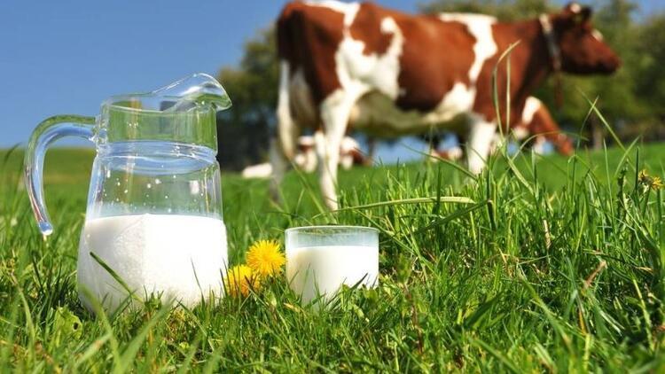 Hangi süt daha güvenilir?