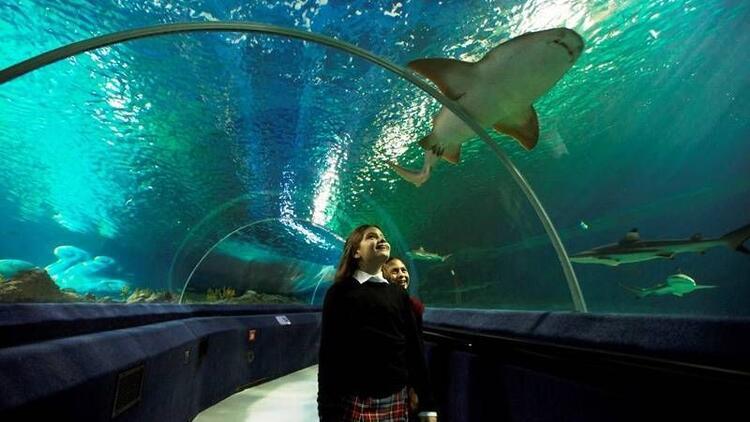Sea Life Akvayum sizleri bekliyor