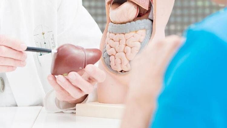 Canlı vericiden karaciğer nakli nasıl olur?