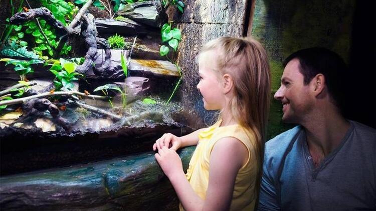 Sea Life Akvaryum'dan babalar gününe özel sürpriz