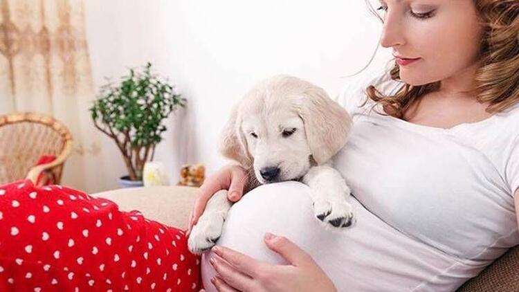 Gebelikte hayvan beslemek bebeğe zarar verir mi?