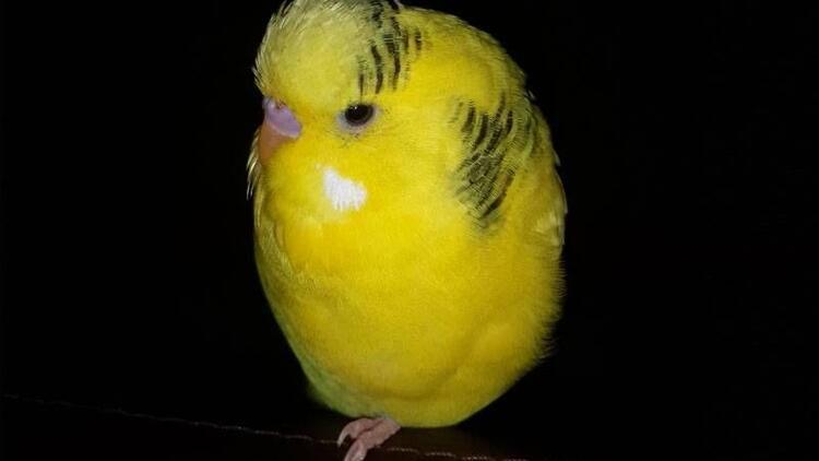 Kuş demeye bin şahit ister