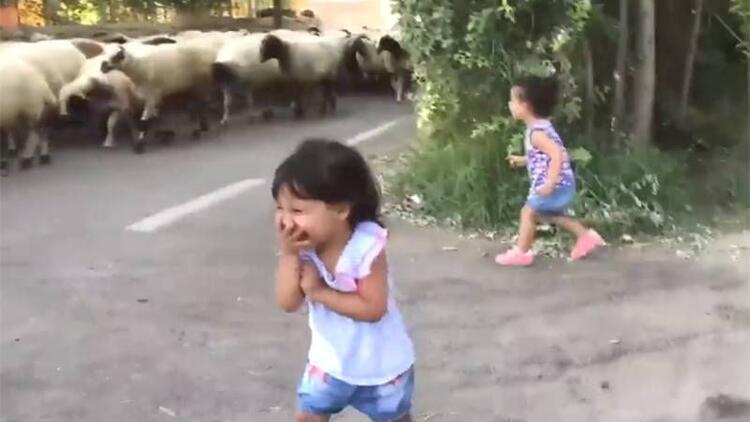 İlk kez koyun gören ikizlerin şaşkınlığı