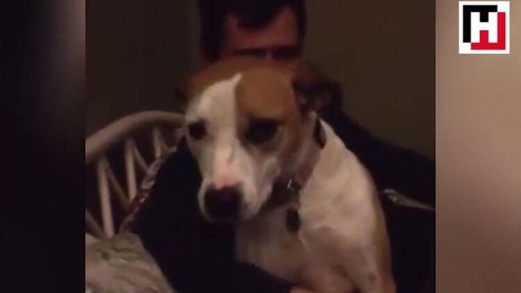 Sahibinin sarılmasını hiçbir şeye değişmeyen köpek