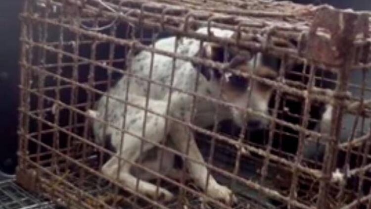 Yıllarca kafese hapsedilen köpeğin mutlu sonu