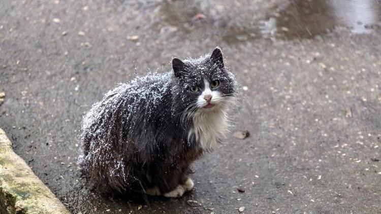 Soğukta sokak hayvanlarını unutmayın
