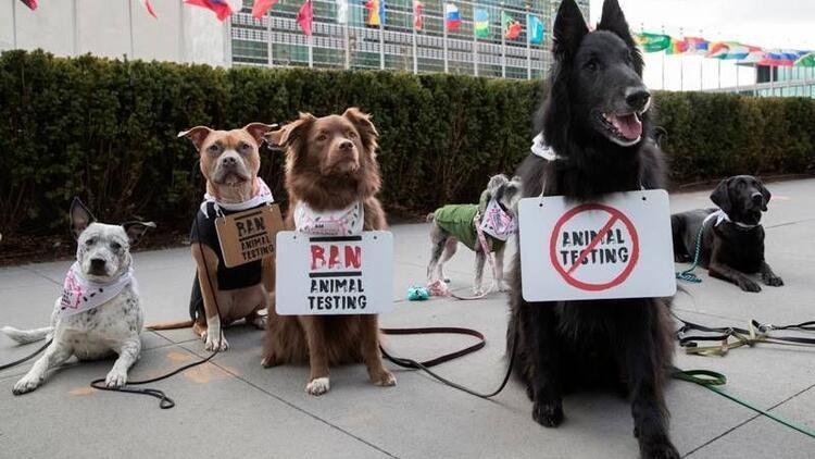 Hayvan deneylerini durdurmak için protesto ettiler