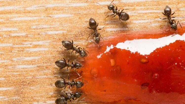 Doğal yöntemlerle karıncalardan kurtulun