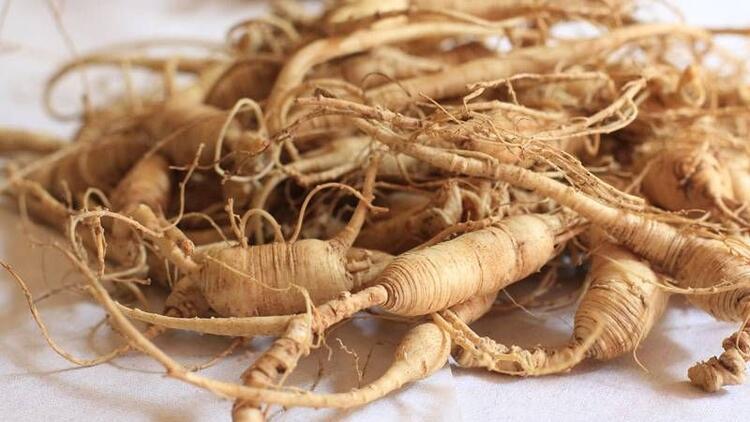 Ginseng nedir? Ginseng faydaları ve tüketimi