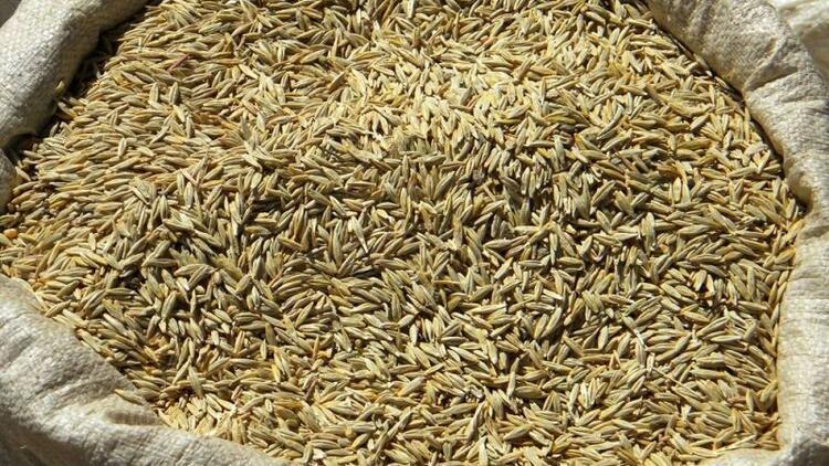 Teff tohumu nedir? Teff çayının zararları nelerdir?