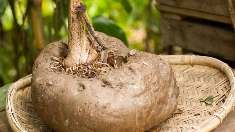 Konja bitkisinin faydaları nelerdir?
