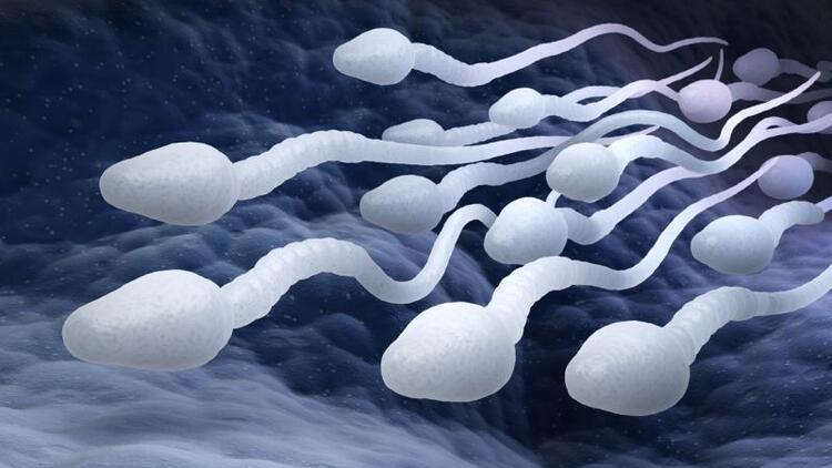 Düşük sperm sayısı daha ciddi hastalıkların habercisi olabilir mi?