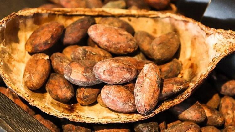 Kakao içeriği yüksek olanlar kalbi koruyor