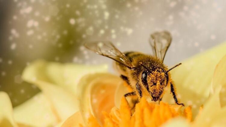 Arılar Varsa Yarınlar Var