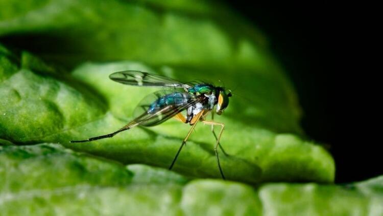 Sivrisinekleri kovan bitkiler nelerdir?