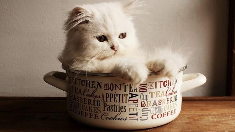 Kedimin mutfağa girmesini nasıl önlerim?